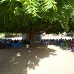 Accueil sous l'arbre à palabre