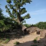 Baobab et case